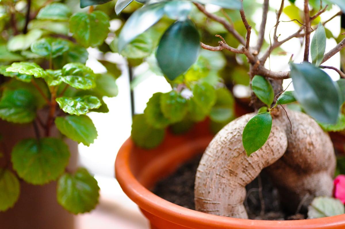 Mis bonitas plantas/My beautiful plants.