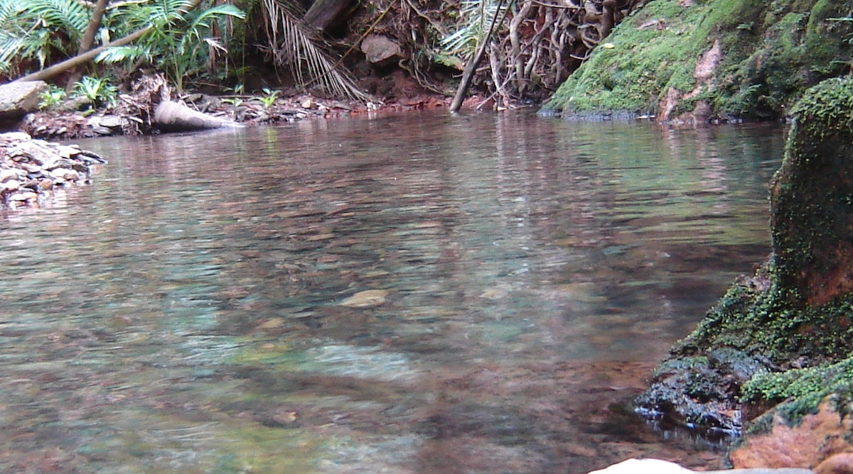 The private creek meanders its way through the cottage grounds and provides great bathing holes to cool off on warm days