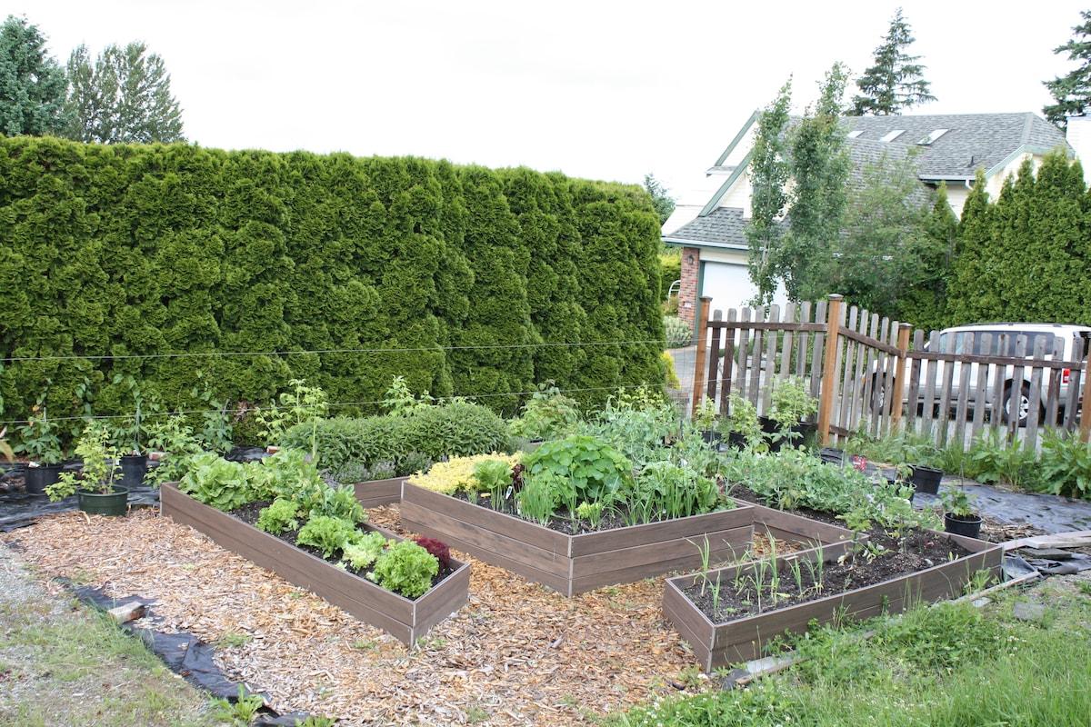 Lower vegetable salad garden