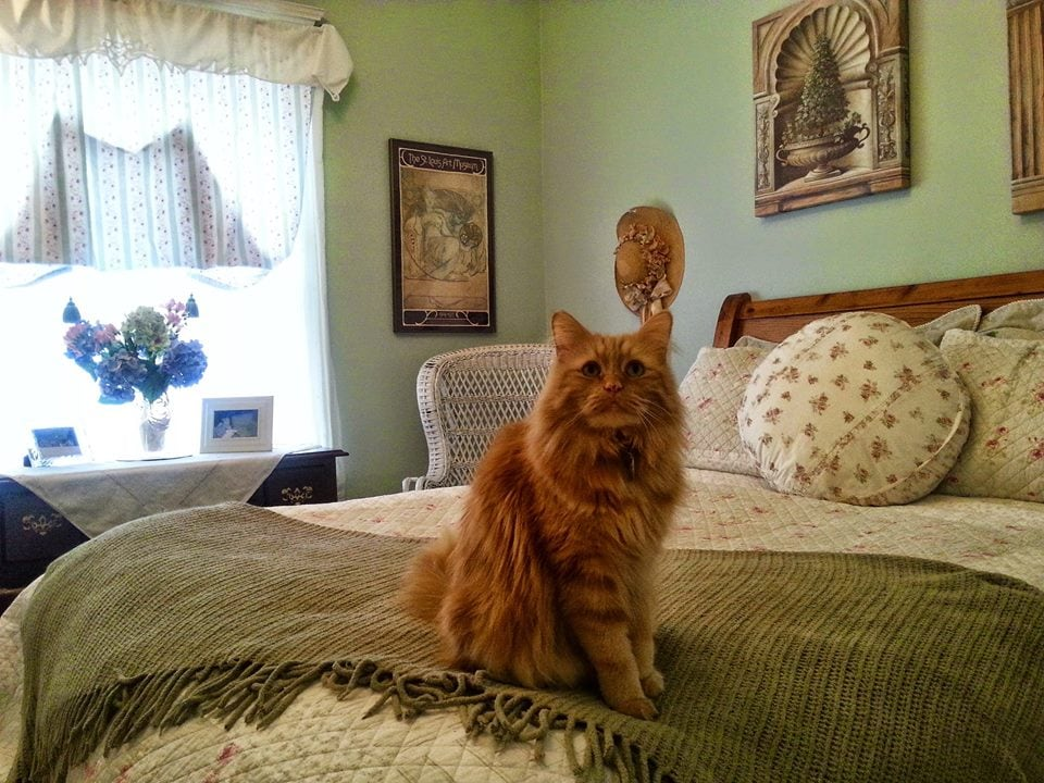 Elliot welcoming you to your bedroom.  Newly painted and redecorated.
