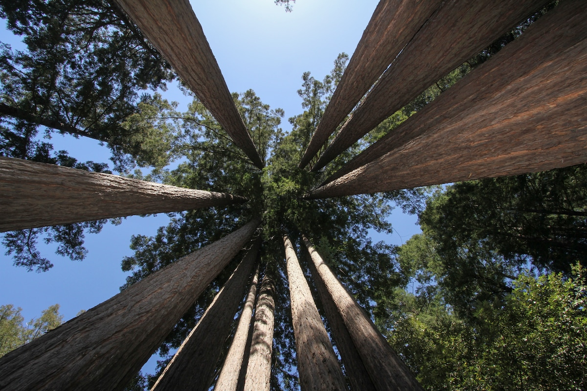 Amazing Redwoods are on the property!
