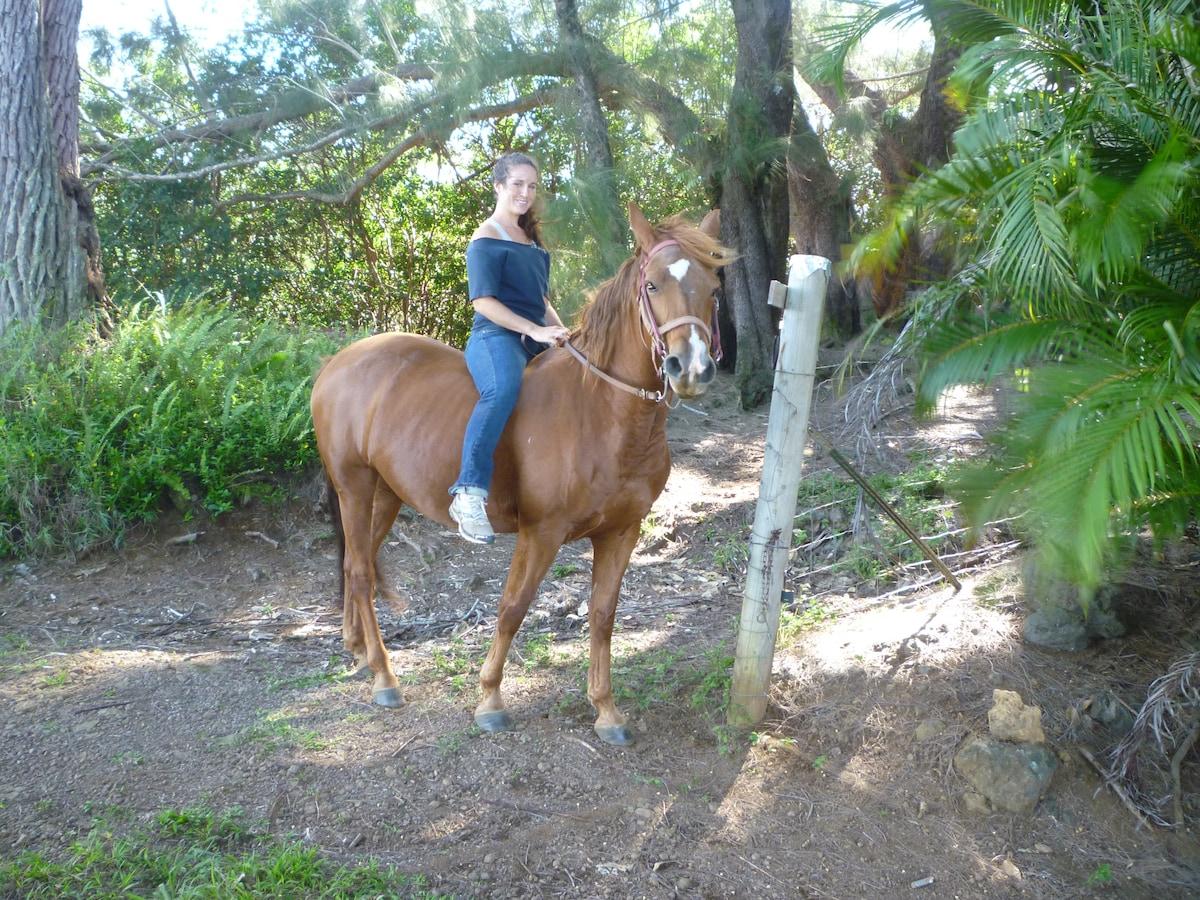Horses and Waterfalls