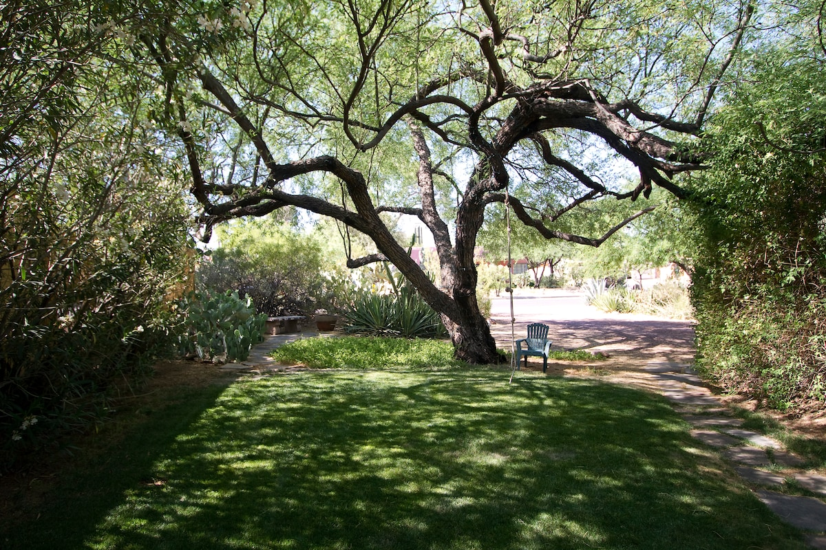 Front yard with rope swing and century old velvet mesquite tree