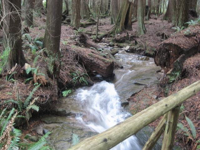 Joe Creek, flowing through the 5 acre property