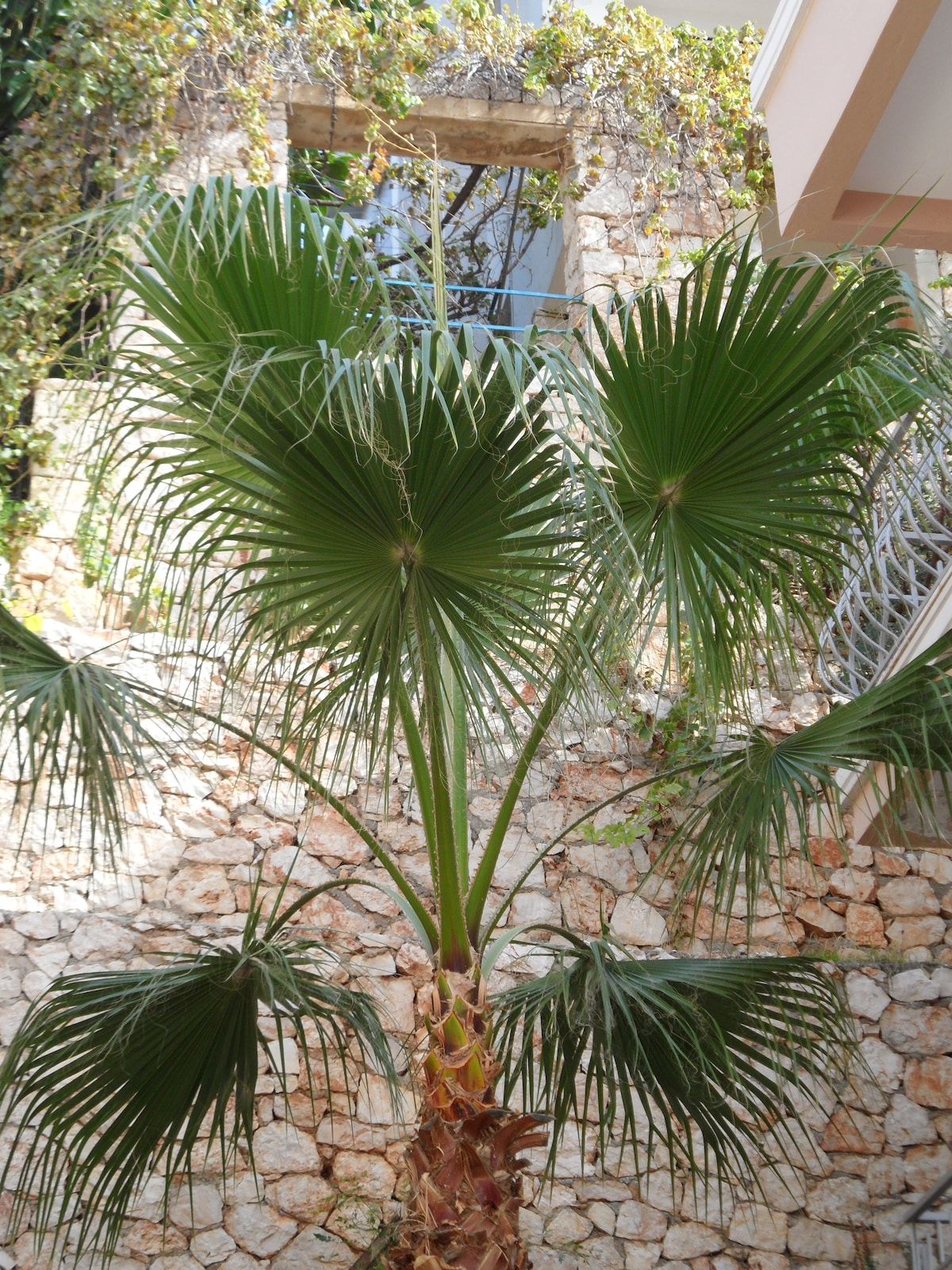 Eine Palme steht beim Nachbarn