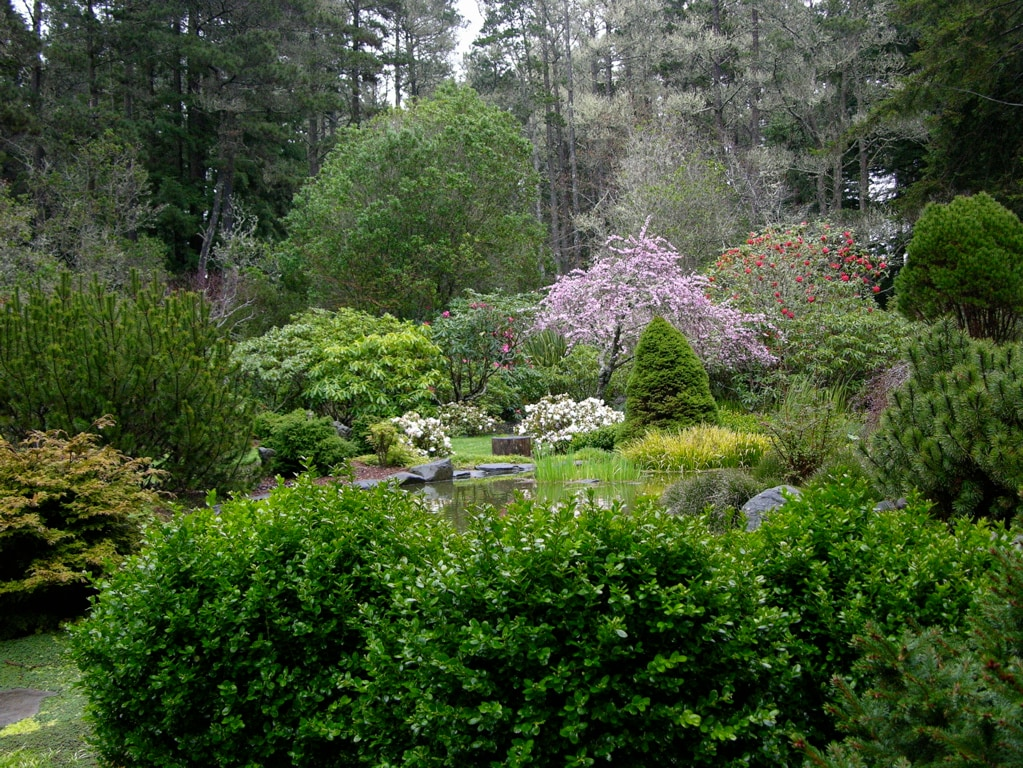 The rhododendron garden in early spring