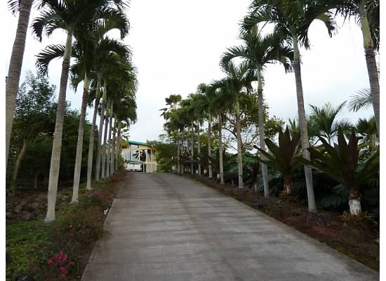 Driveway to the fully gated estate
