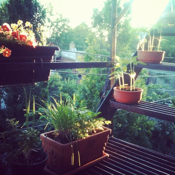 I have a ton of plants. Here are some herbs and stuff on my fire escape.