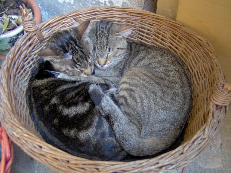... of many cats | ...ai molti gatti