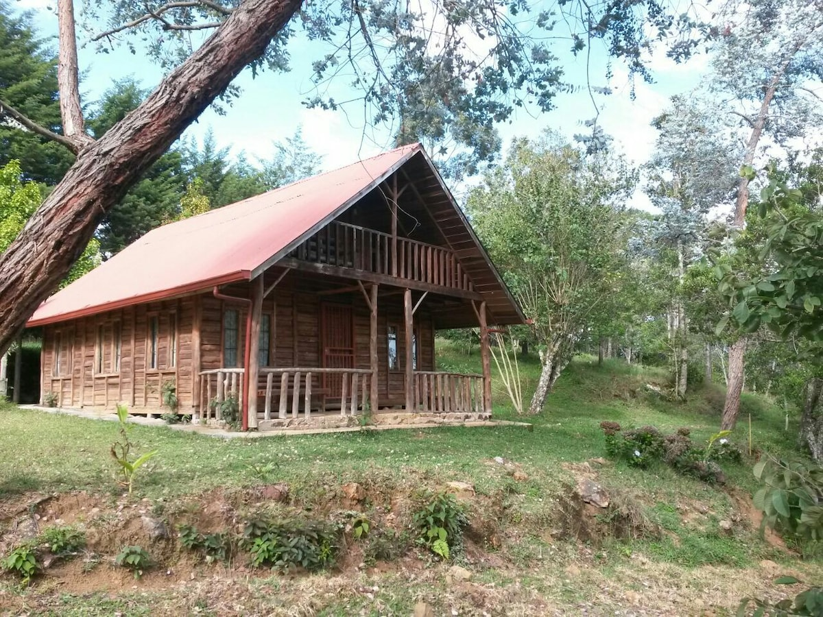 Cottage between coffee plantation