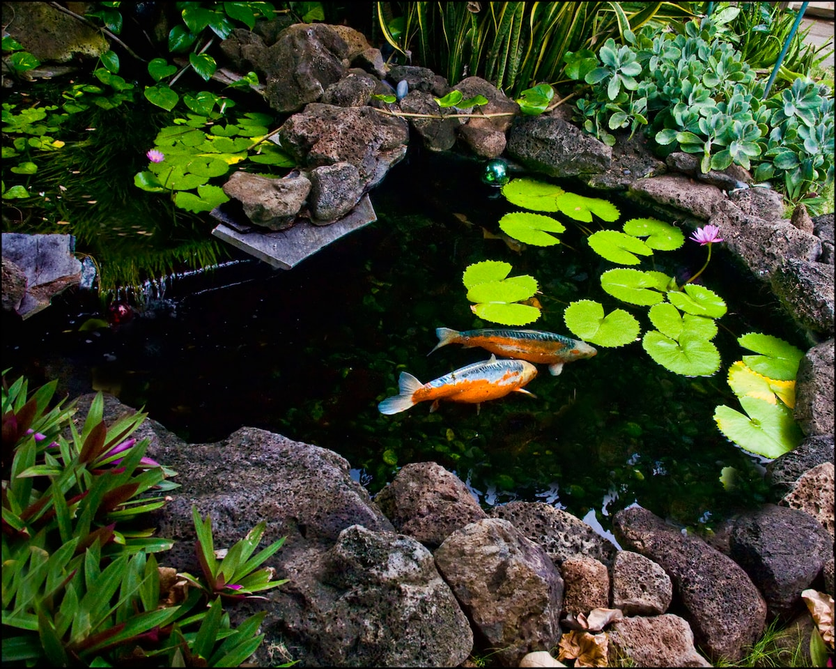 Koi pond in the garden area.