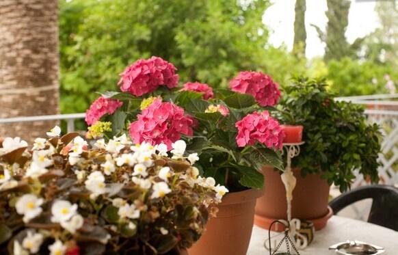 Veggie Garden B&B