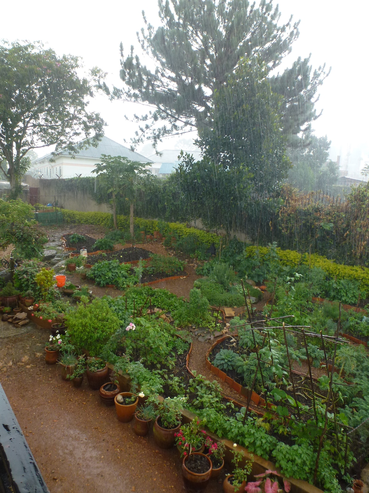 View of veggie garden from upper terrace