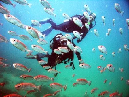 Mergulho na Praia do Forno- Arraial do Cabo