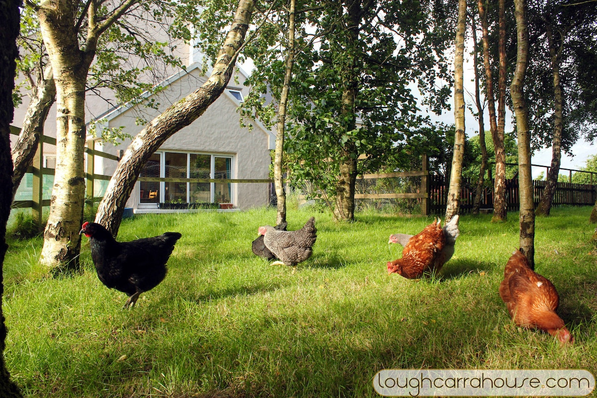 Fun mum including twins. Dogs, hens, gardening and