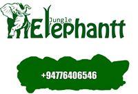Jungle Elephantt from Udawalawa