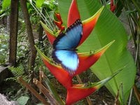 Mariposario From Costa Rica