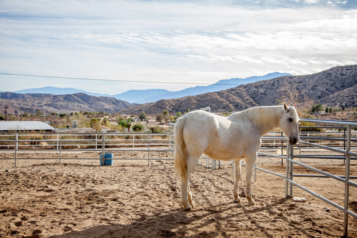 Crazy Horse Ranch Carriage House