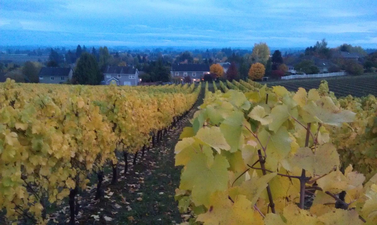 Autumn: View of our home and Willamette Valley from the vineyard. Ours is the house in the middle of the photo.