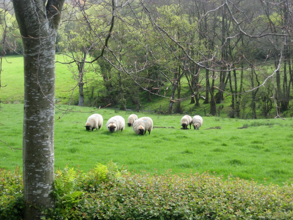 Sheep in field at back of garden