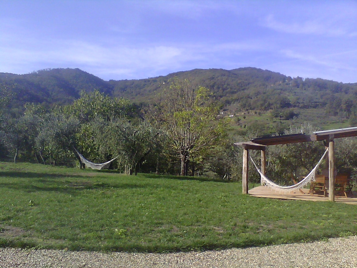 ...just relax on a hammock under the fig tree...this is real life!