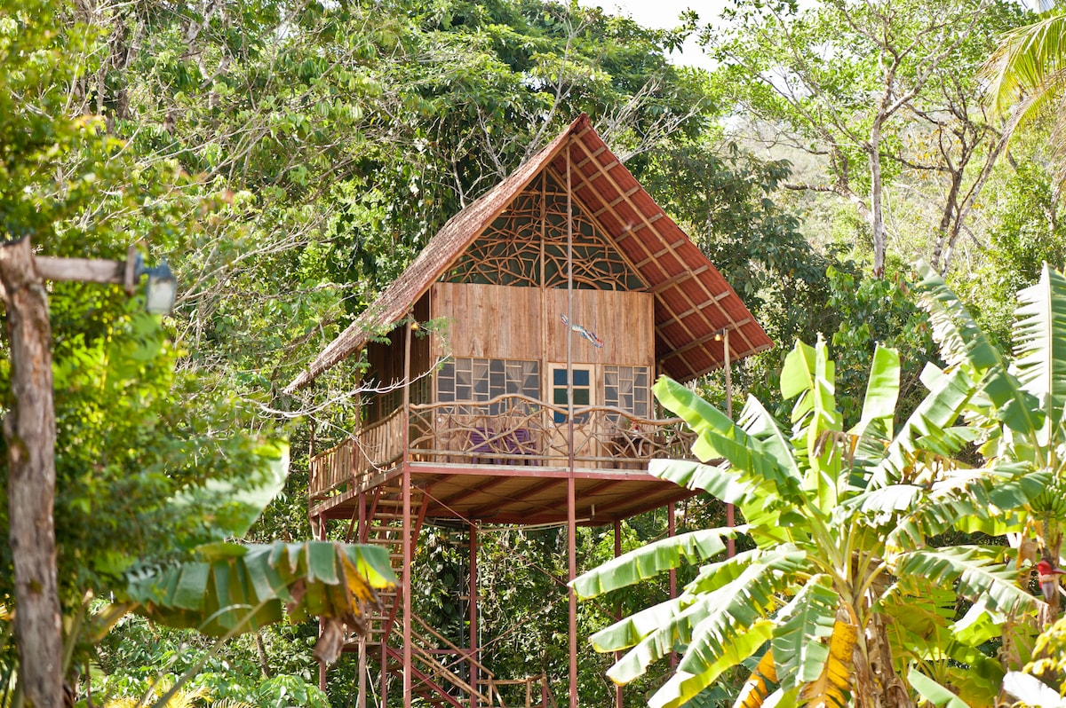 Tree House in our 35 acre rainforest