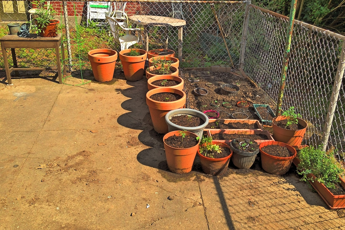 Patio Garden circa early summer 2013 – Tomatoes, Squash, Peppers, Corn, Parsley, Basil, Sage, etc.