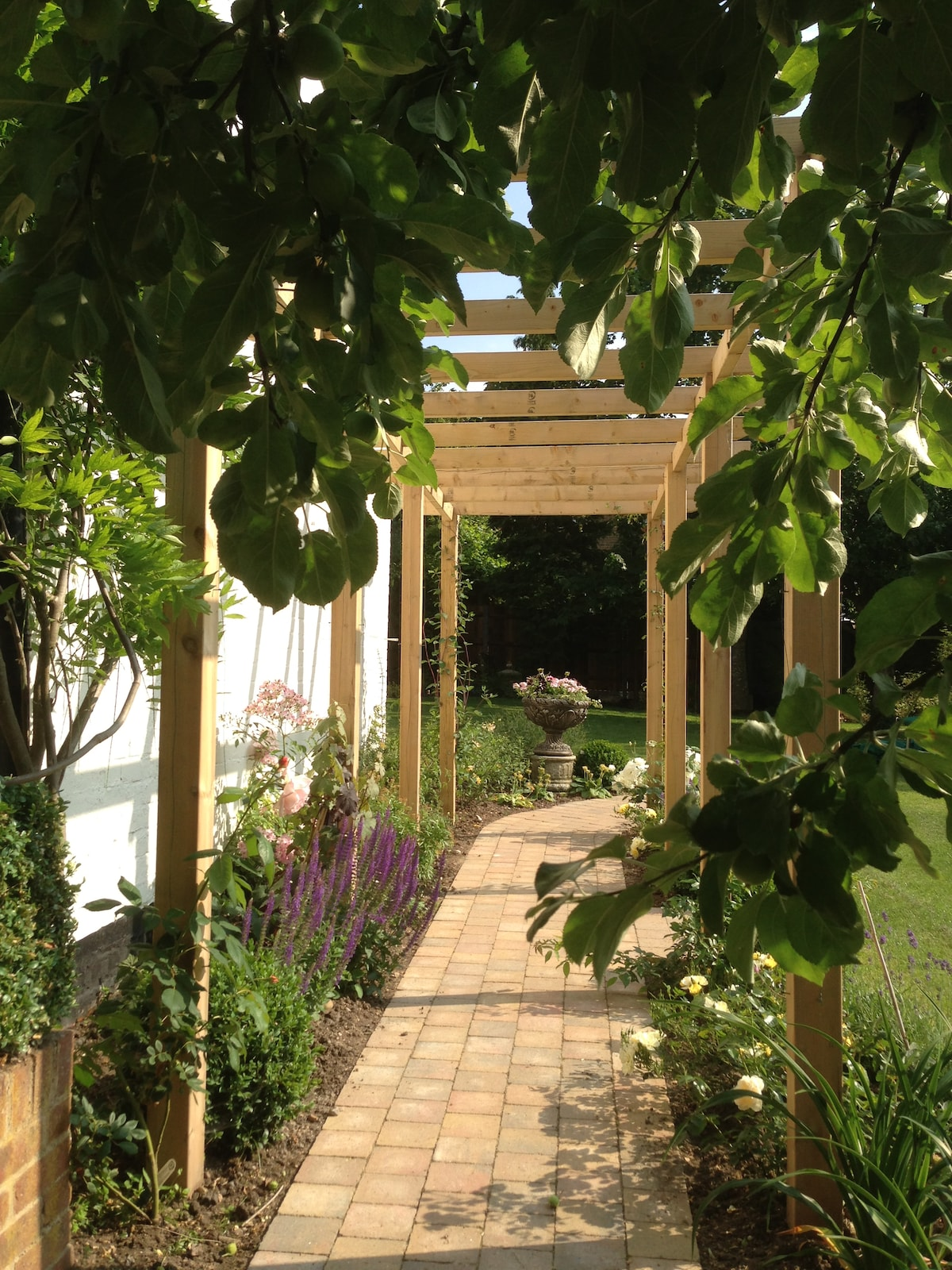 The apple tree and the pergola.