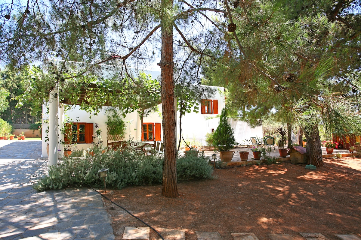 The house is well-hidden in the pine forest overlooking Chania
