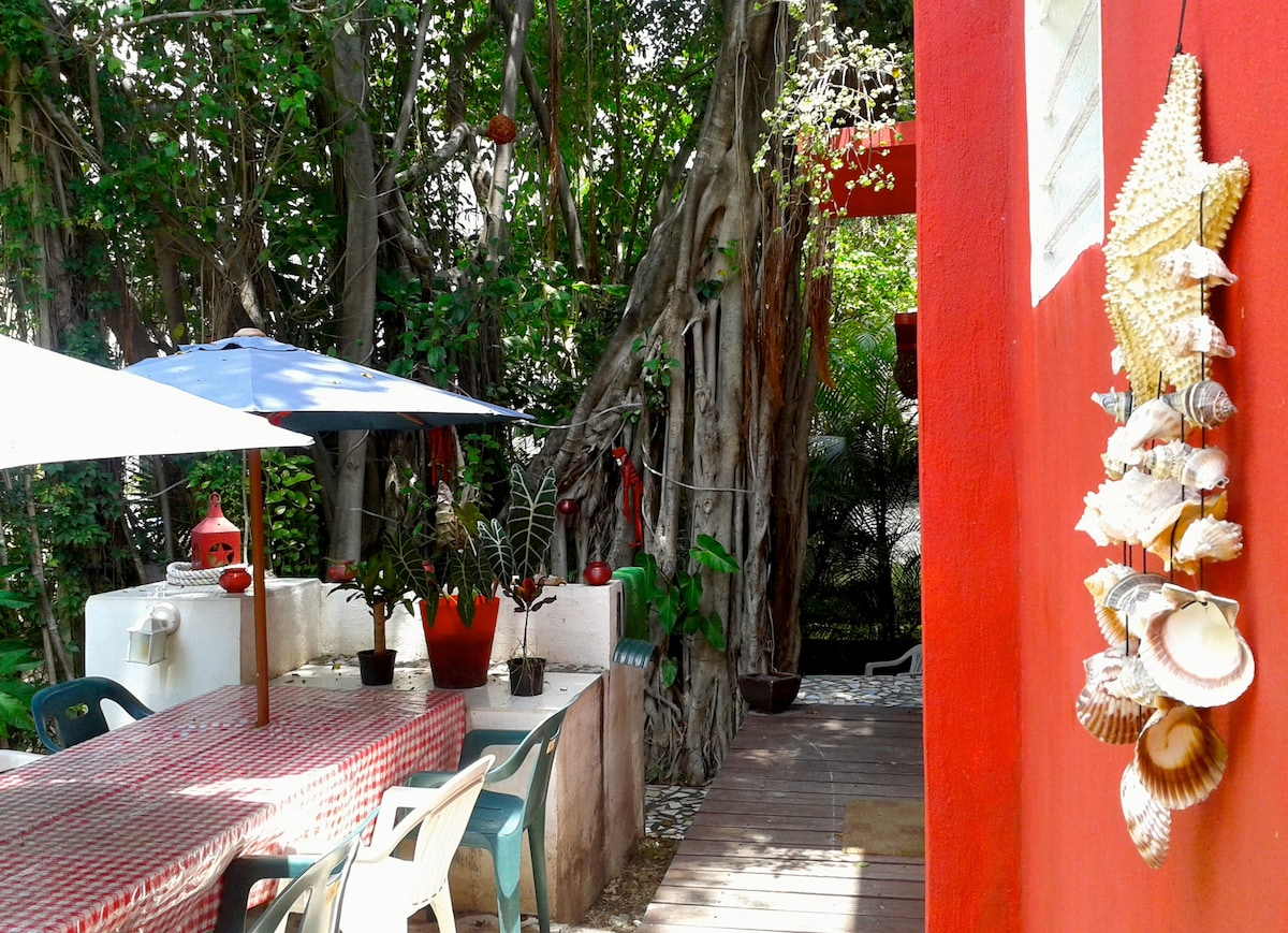 Our lovely patio with a banyan tree / Nuestro hermoso patio con la sombra de un baniano