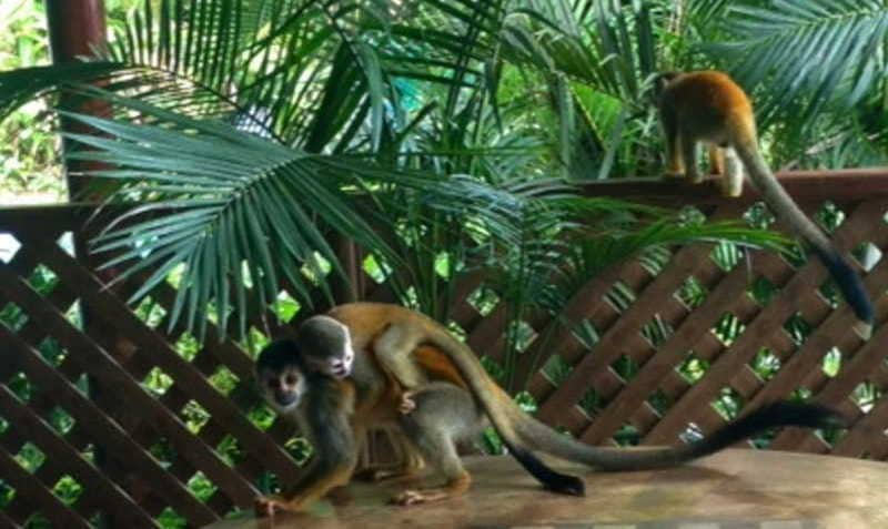 Monkey mothers pass by regularly to show their new babies