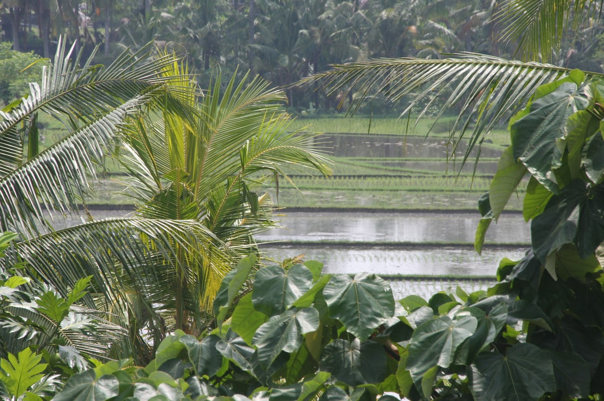 Beautiful Rice paddy views from Top bedroom suit