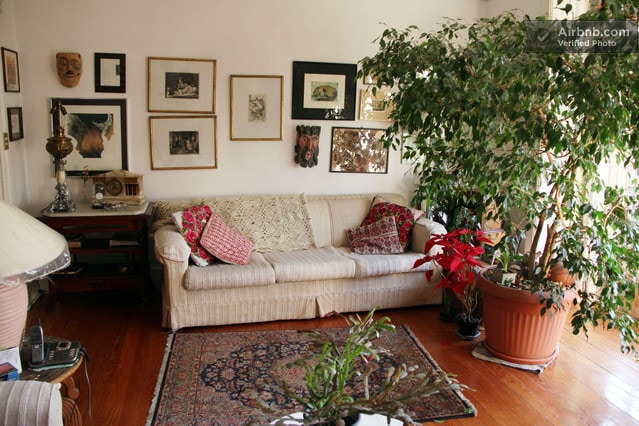 Living room and ficus