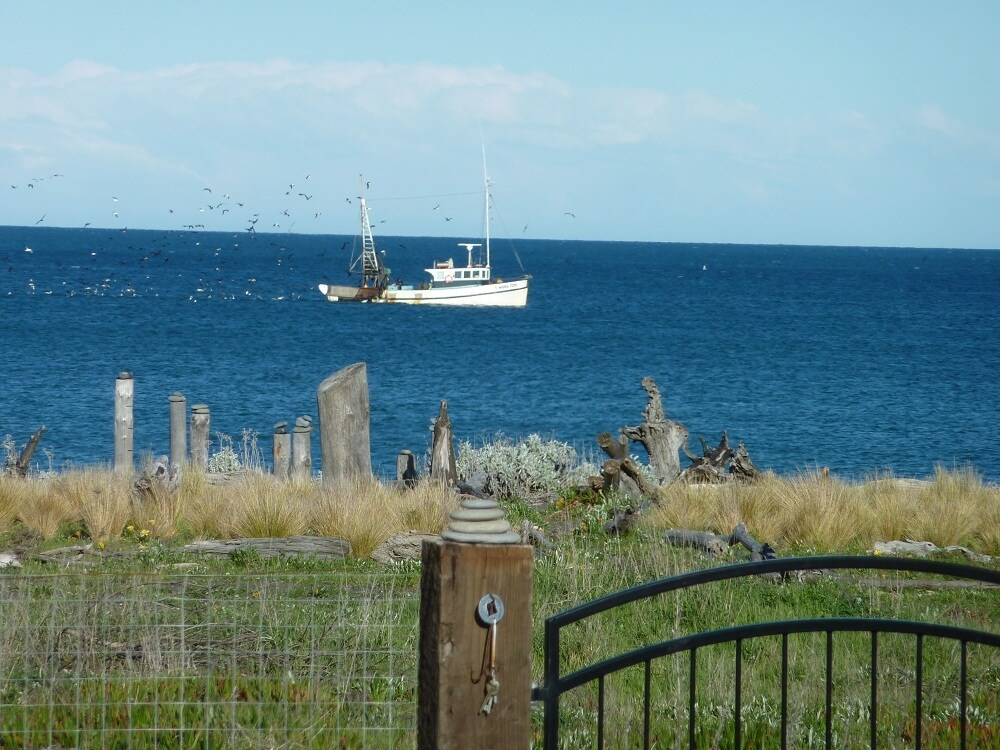 Fishing boats are regularly seen, this one dredging for Cloudy Bay Clams.