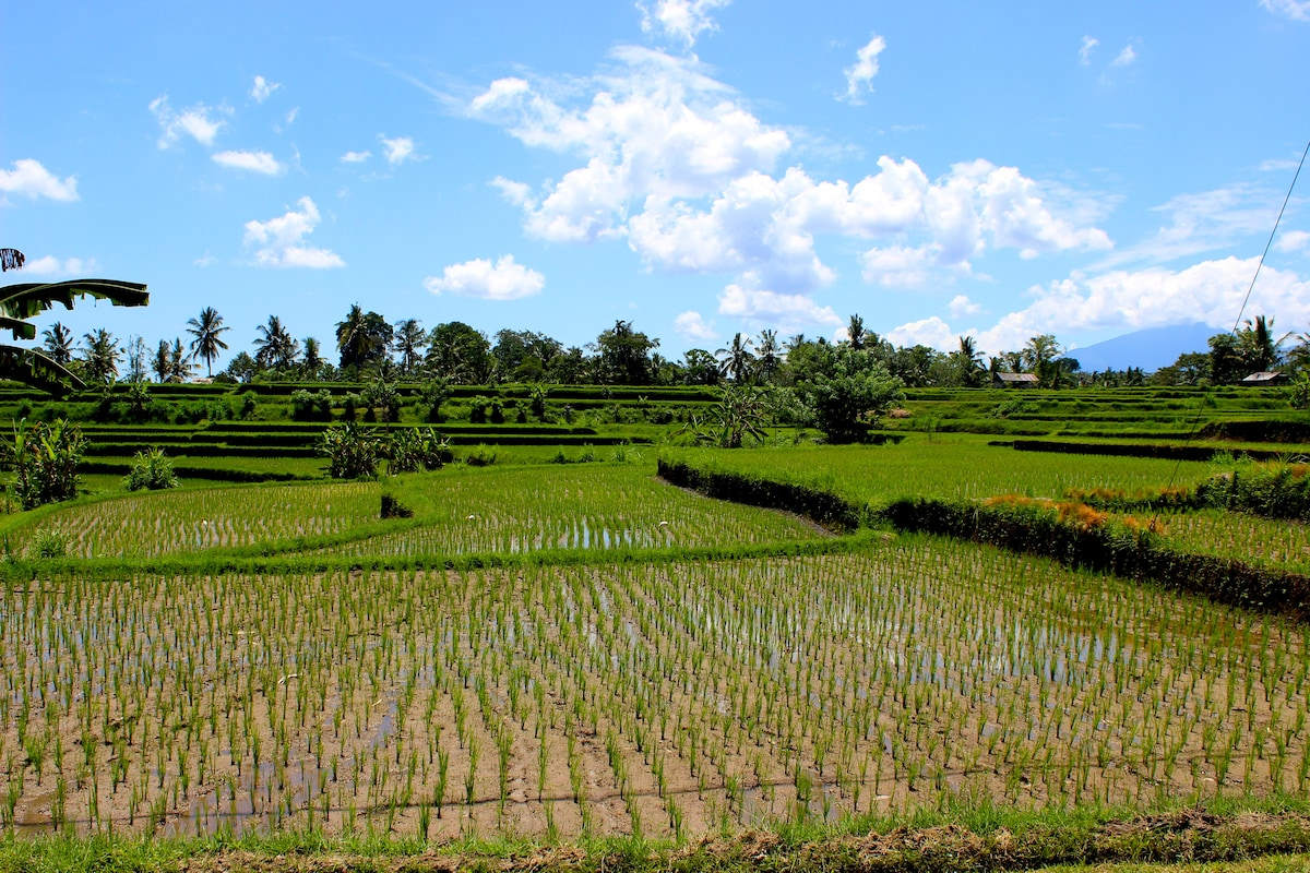 This is what happens when you open the front door.  It is just ridiculous!!  Freshly planted rice fields terraced as far as you can see in all directions to a line of palm trees.  Distant towards the right are the mountains of Bali where you can watch the