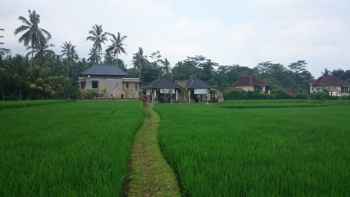 View from rice fields