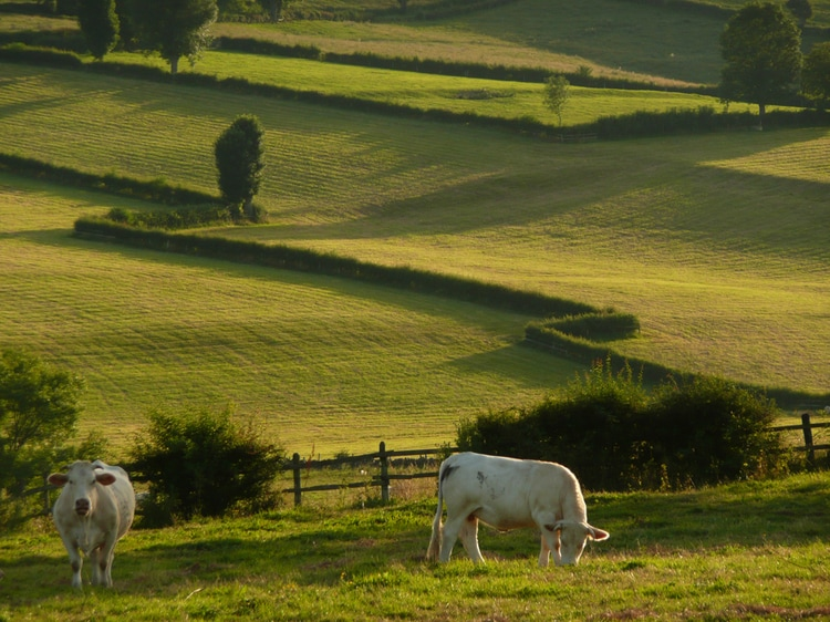 The Charolais-Brionnais landscape. Just...outside the door!