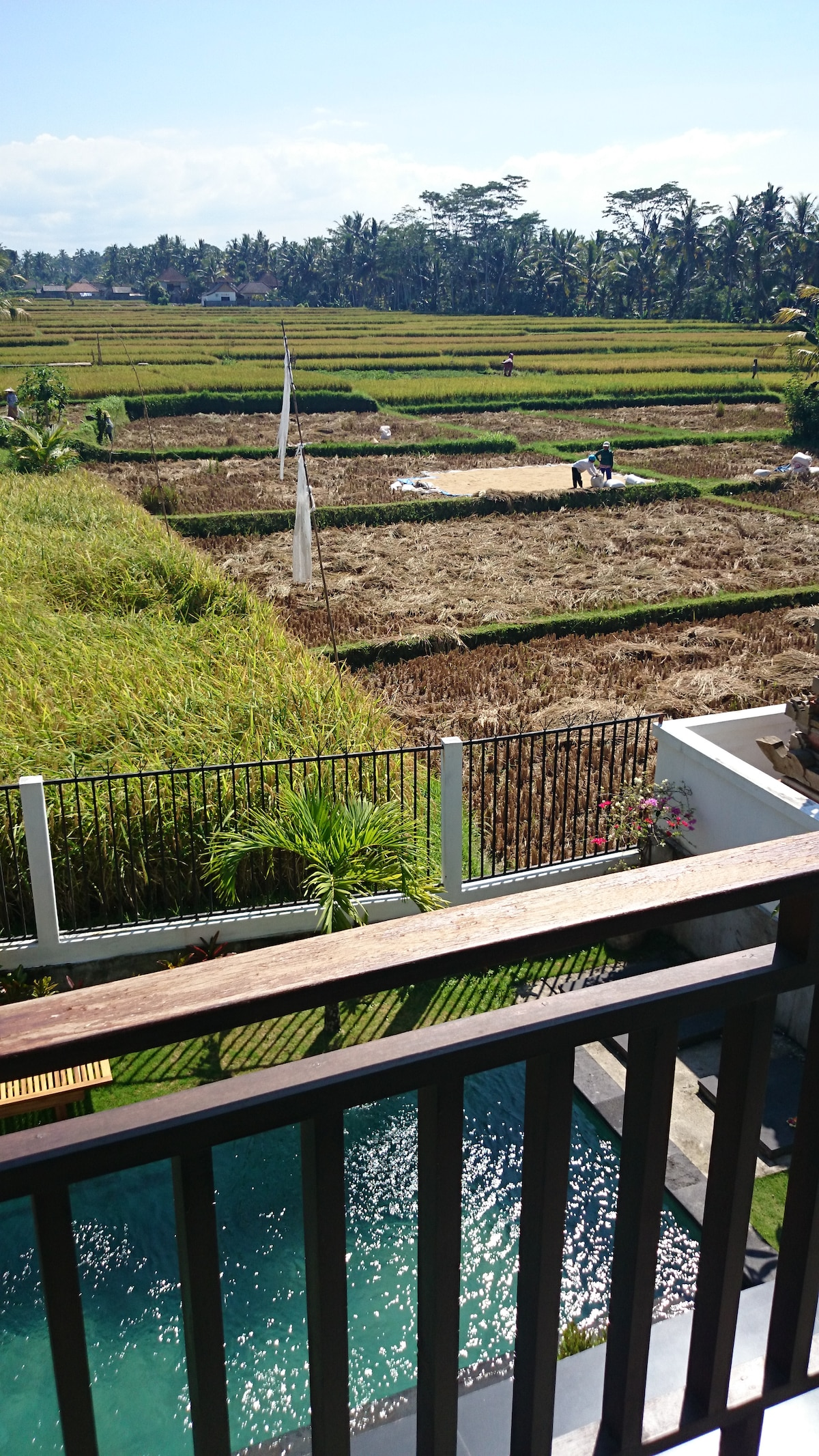 Rice field view from bedroom terrace.