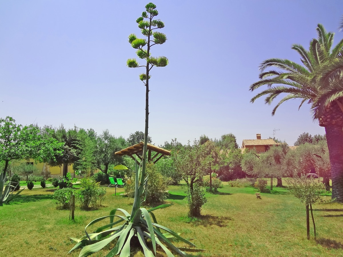 The 5000 square meters garden