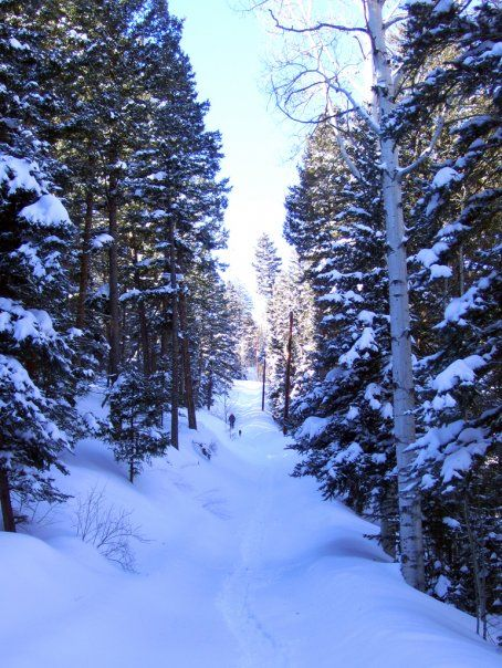 Road up to the cabin after a big snow in winter.  Consistently plowed.  Hilltop location affords great views.