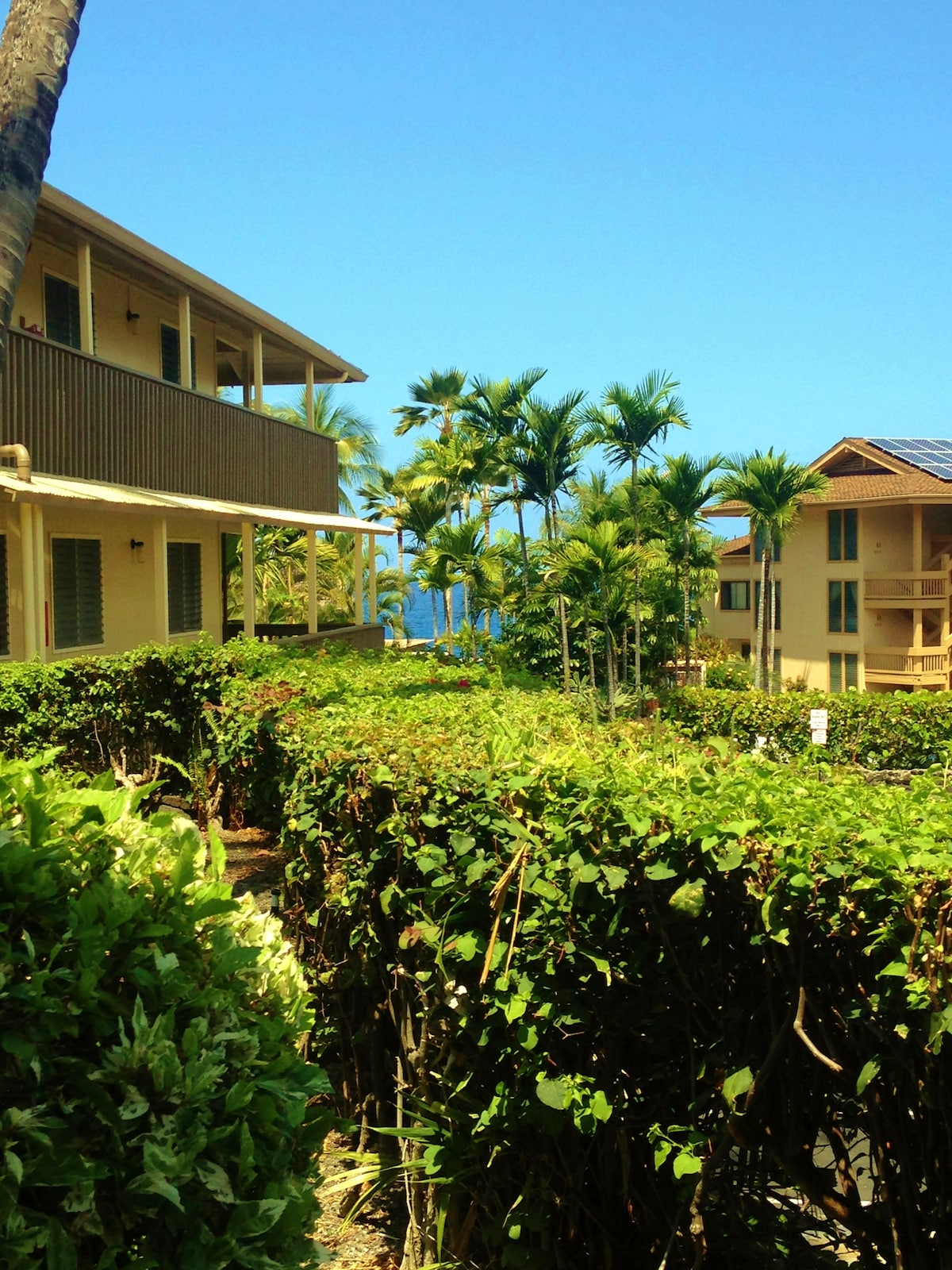 Peek-a-boo ocean view and lush greenery from your front windows