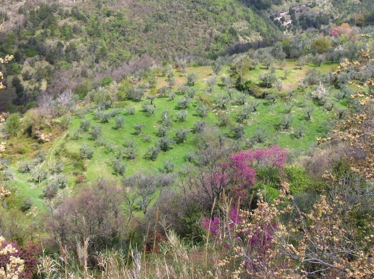 roman countryside b&b