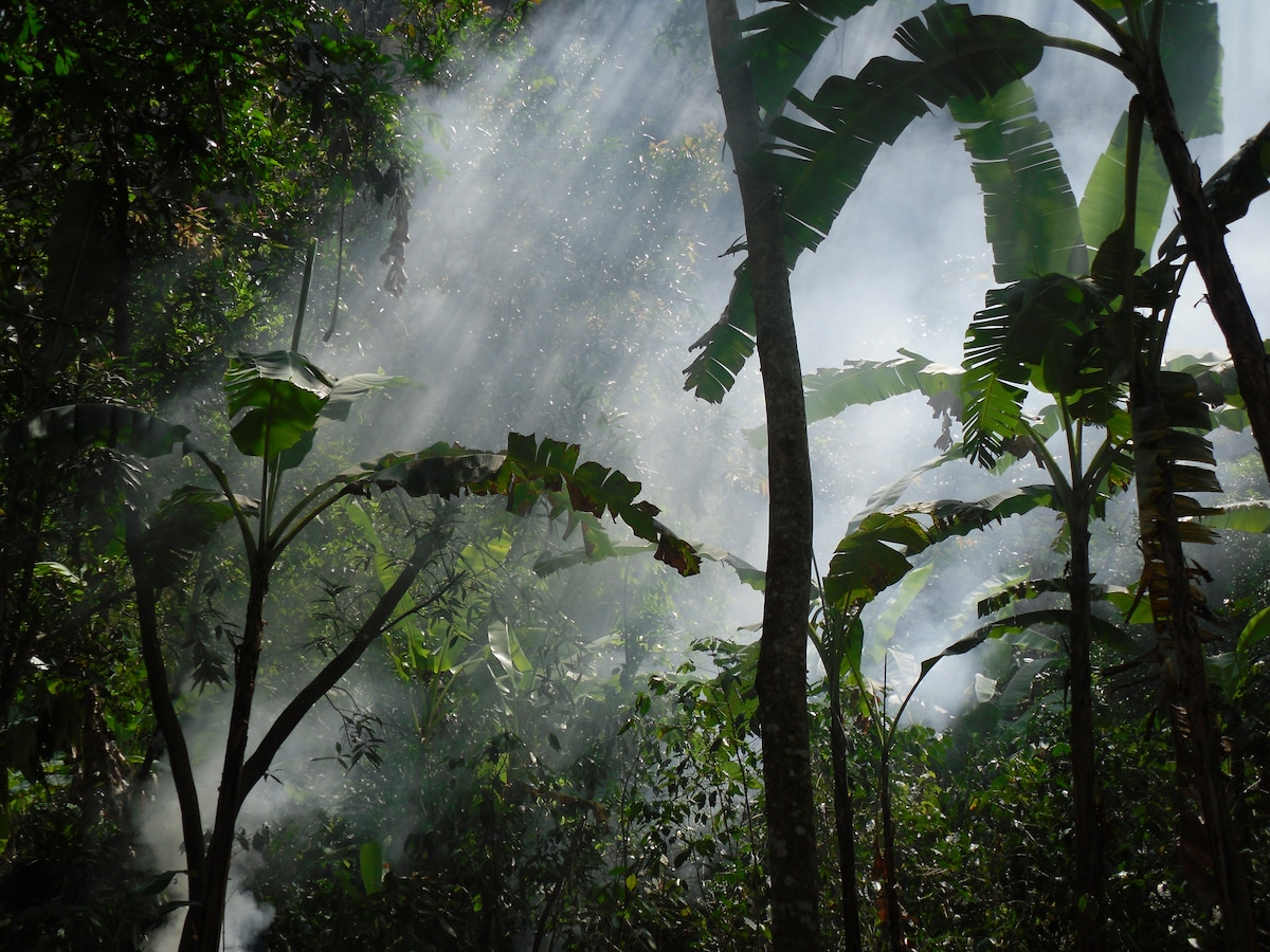 Cloud Forest accommodation a few hours walk from Machu Picchu