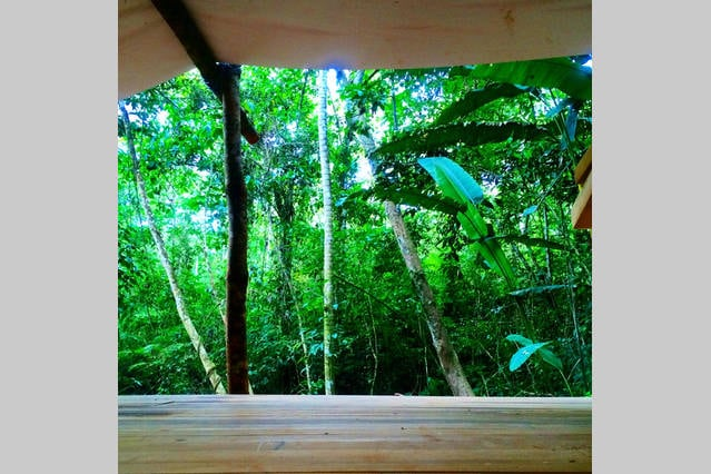 Rainforest Serenity