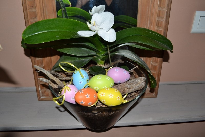 HAPPY EASTER AT LOVE NEST THE ORCHID ;)