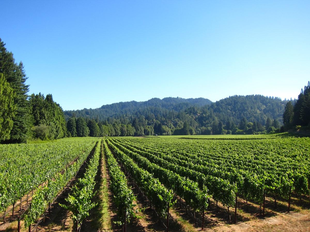 Vineyard backyard!