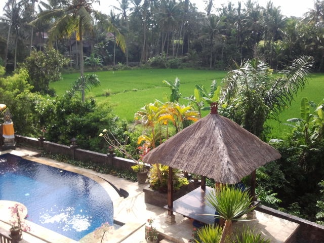 Real BALI, rice fields & palm trees