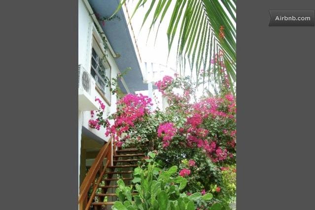 Flowering bushes around the villa.