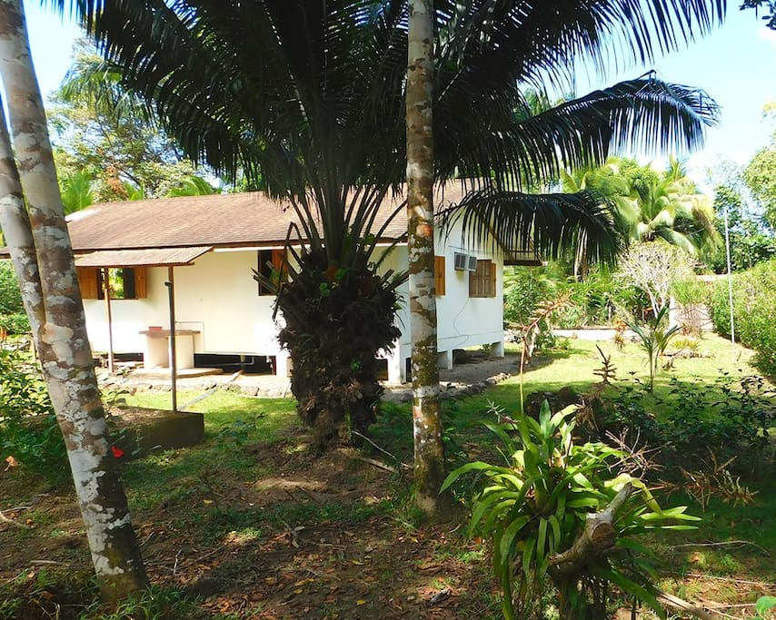 House hided behind palms