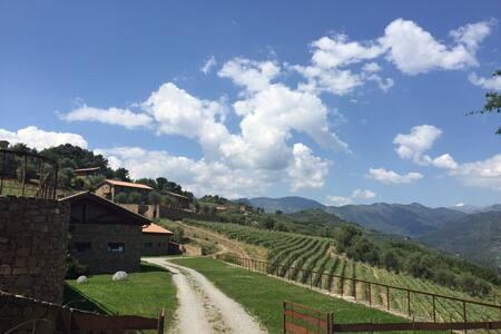 Travigne-Altavia - Dolceacqua - Villa